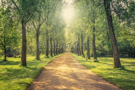 blu bello bella ambiente albero orizzonte