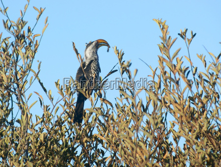 foglia albero animale uccello africa luce