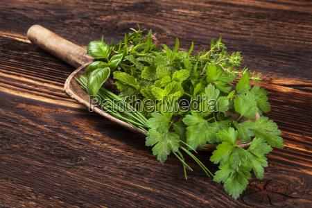 cibo spezia condimento legno marrone foglie