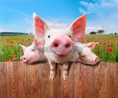 industria industriale animale mammifero legno animali
