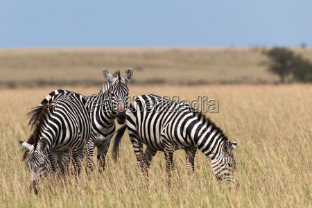 vacanza vacanze africa kenia animali cavallo