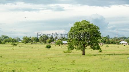 albero vegetazione paesaggio natura prato alto