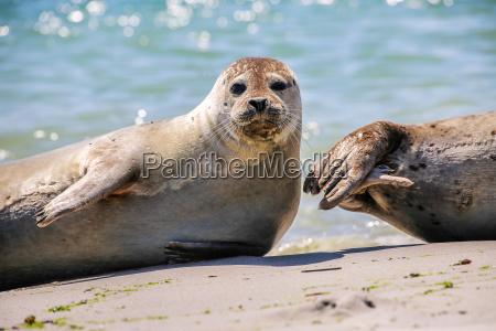 animale mammifero acqua mare del nord
