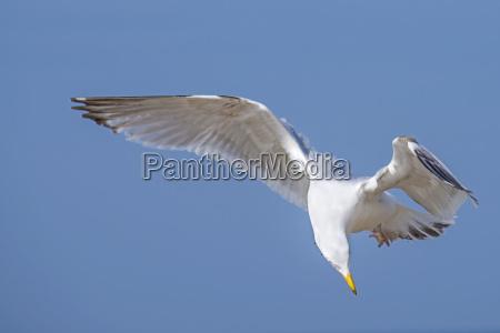 blu uccello fauna luce soleggiato uccelli