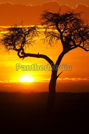 tramonto africano tramonto africano