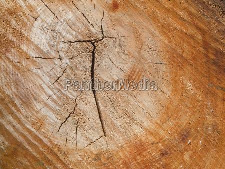 albero legno marrone tronco tempo superficie