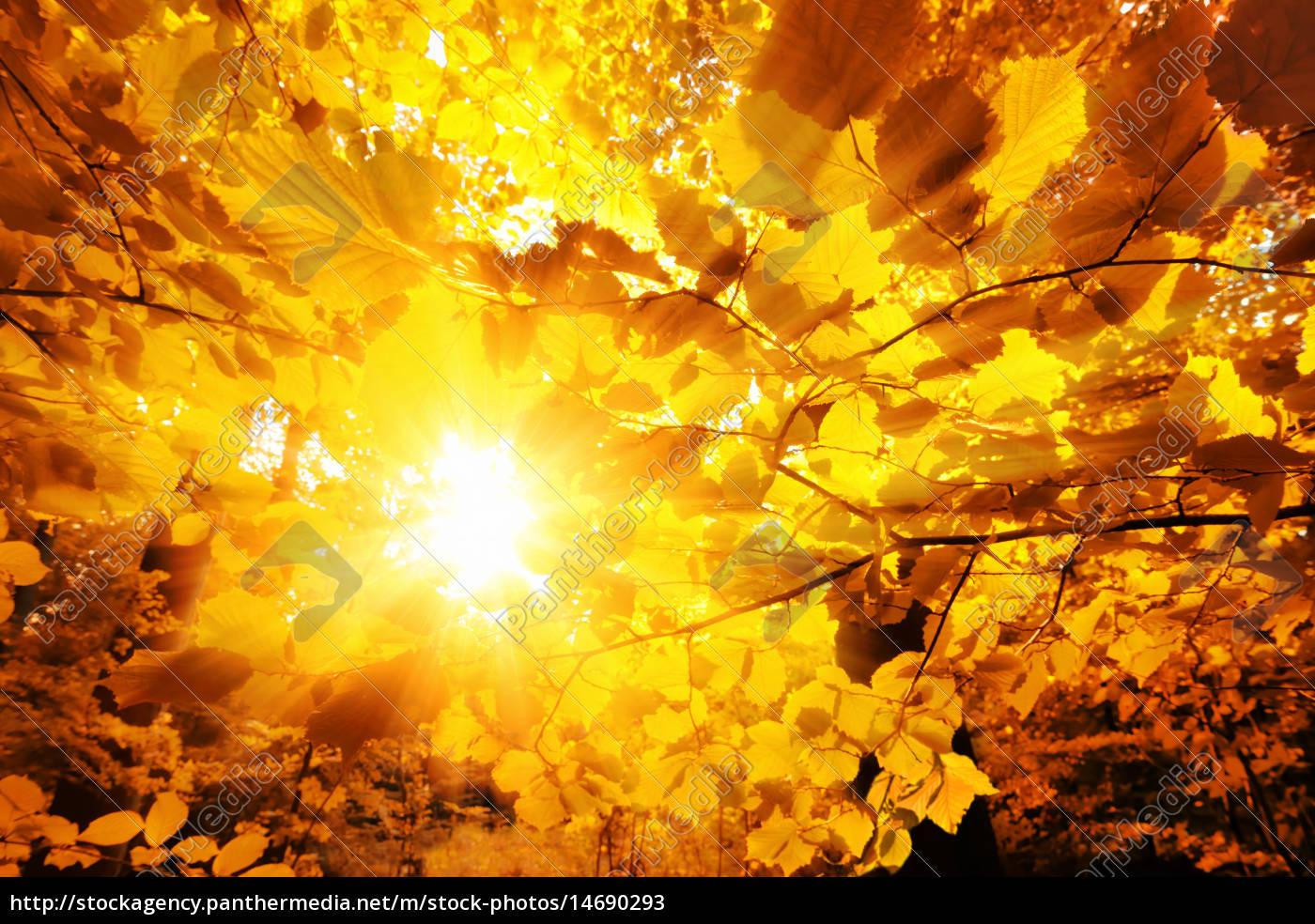 the, sun, shining, through, autumn, leaves - 14690293