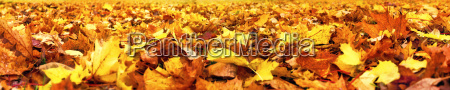 autumn leaves superwide banner
