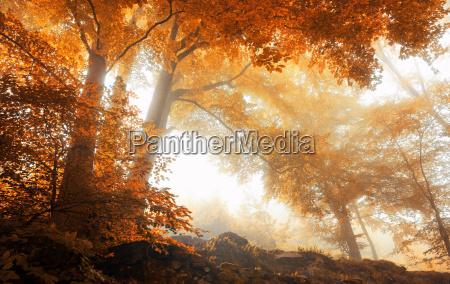 albero alberi nebbia paesaggio natura foresta