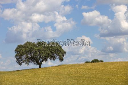 agricoltura campo portogallo fattoria fieno paesistico