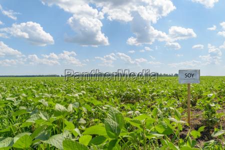 orizzonte campo vendemmia fattoria soia paesaggio