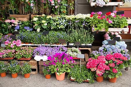 fiori e piante al di fuori
