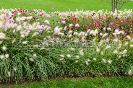 erbe ornamentali nel parco