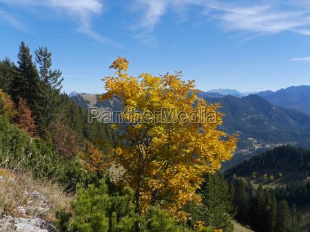 alpi baviera montagna autunno