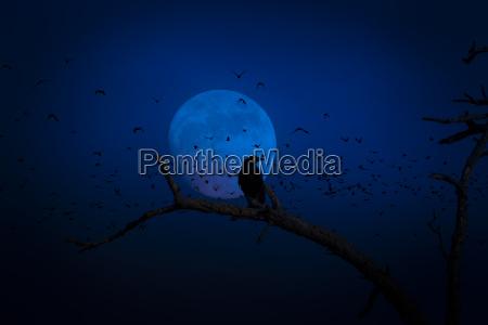 luna corvo spettrale raccapricciante halloween plenilunio