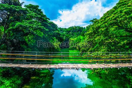 ponte giungla fuori esotico bambu tropicale