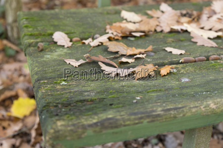 leaves on old bench