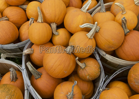 zucca stagione ringraziamento arancione verdure giorno