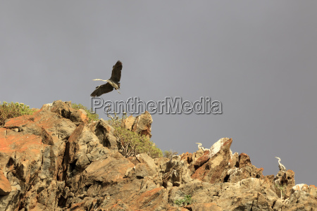 heron on cliffs in the south