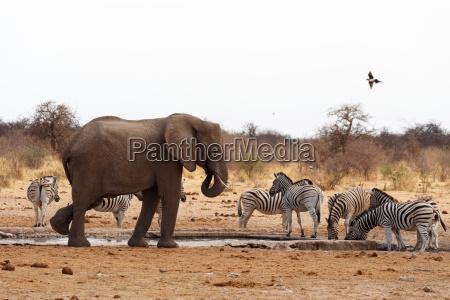 africa elefante natura luogo selvaggio