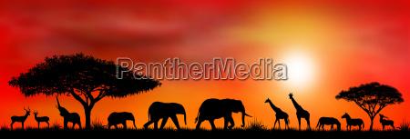 selvaggio animali africano silhouette