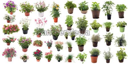erbe, aromatiche, e, piante, da, fiore - 15360617