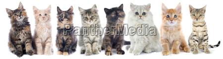 gruppo di gattini