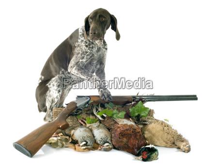 giochi di caccia e cane