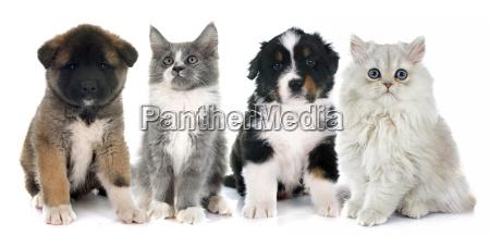 cuccioli e gattino