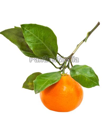 brunch with fresh abkhazian tangerine isolated