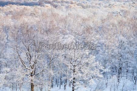 querce da neve illuminate dal sole
