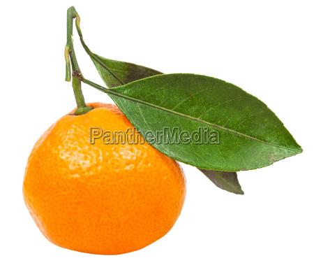 mandarino, abkhaziano, maturo, con, foglie, isolate - 15417035