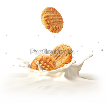two cookies biscuits falling into milk