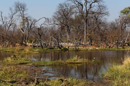 gioco giocato giocare africa riserva botswana