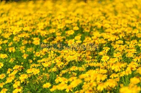 fiore pianta flora botanica freschezza mondo