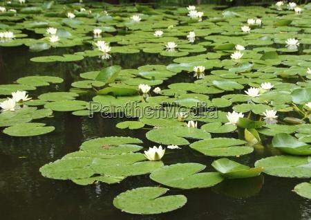 parco fiore pianta foglie estate riflesso