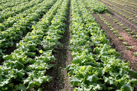 piantare seminare coltivazione impianto agricoltura campo