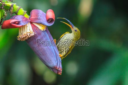 uccello fiore pianta cacciatore ragno succhiare