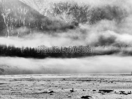 albero alberi montagne nebbia abeti paesaggio