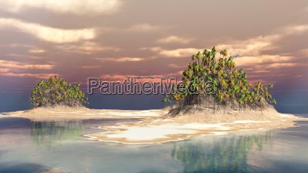 riva del mare spiaggia palma acqua