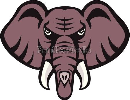 elefante zanna toro furioso arrabbiato rabbioso