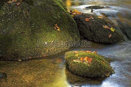 foglie torrente baviera stagione germania paesaggio
