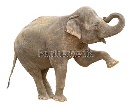 profilo saluti rilasciato colore femminile animale