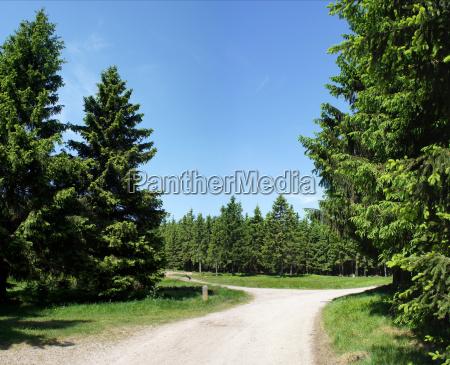 crocevia nella foresta di turingia