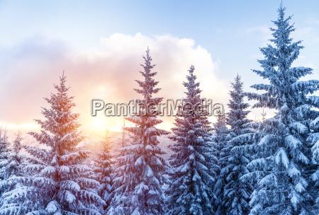 bella foresta di inverno