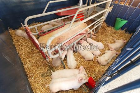 animali agricoltura fattoria gabbia seminare coltivare