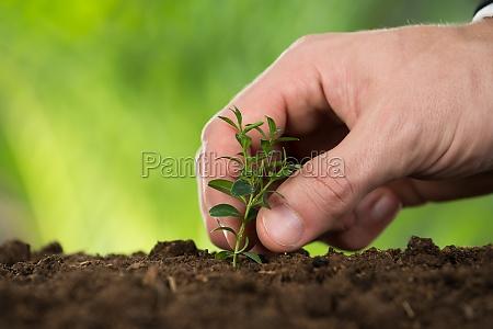 mano della persona che pianta piccolo