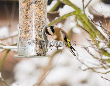 cibo primo piano inverno animale uccello