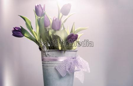 bello bella fioritura fiorire primavera porpora