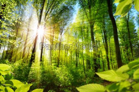alberi decidui sunlit nella foresta